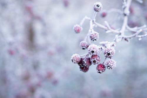 Sneeuw, vorst en thermofood